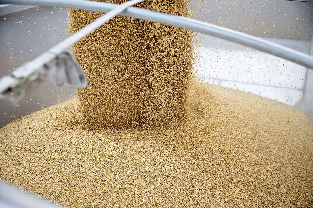 Trung Quốc tạm ngưng mua đậu nành Mỹ, cuộc chiến thuế quan ngày càng leo thang