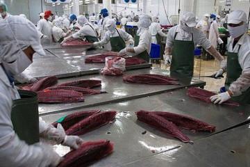 Cá ngừ Việt vẫn khó vào Hàn Quốc