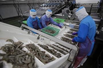 Các thị trường CPTPP 'nâng đỡ' xuất khẩu tôm Việt