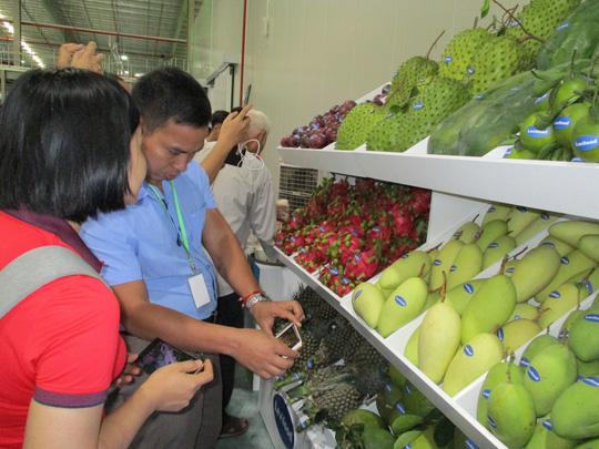 Nông sản Việt vượt rào cản, sang Trung Quốc