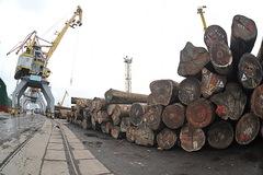 Nhập khẩu gỗ nguyên liệu từ châu Phi: Tiềm ẩn rủi ro