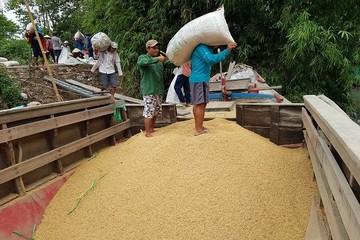 Lo lắng chuyện gạo Việt vào Trung Quốc giảm đến 75%