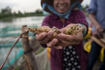 Chủ tịch Sao Ta: EVFTA có tác động mạnh nhất đối với ngành tôm Việt