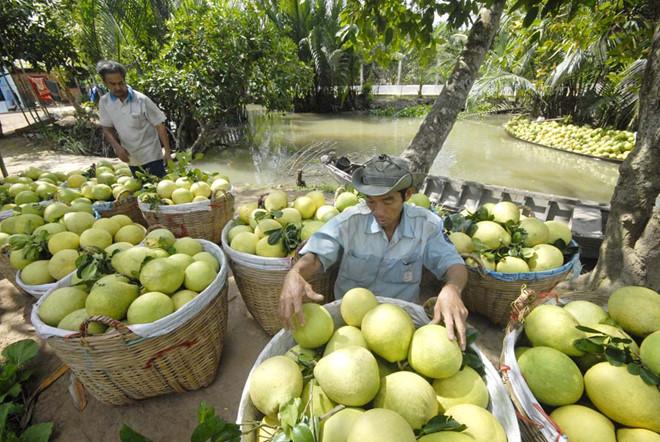 Gỡ 'nút thắt' cho nông sản Việt vào CPTPP