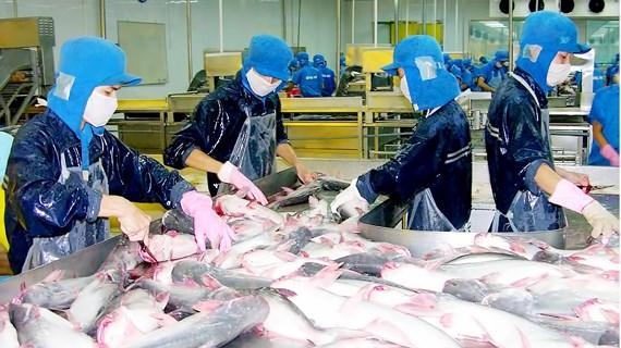 ĐBSCL: Giá cá tra thấp nhất trong 10 năm qua