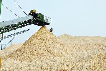 Xuất khẩu dăm gỗ: Đứng đầu thế giới nhưng không 'cầm trịch'