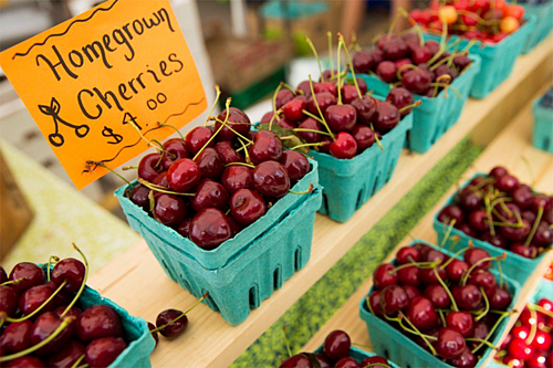 Cherry Mỹ khó xuất sang Trung Quốc do ảnh hưởng của chiến tranh thương mại Mỹ -Trun. Ảnh: Alamy.