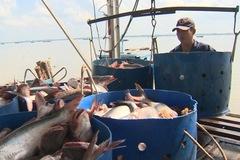 VASEP: Xuất khẩu cá tra quý III sẽ tăng không quá 15%