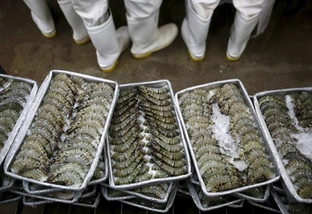 Xuất khẩu tôm sẽ nhích dần về cuối năm nhờ thị trường EU, Mỹ