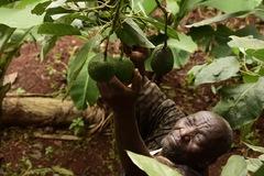 Châu Phi và 'hành trình quả bơ' tái cân bằng thương mại với Trung Quốc