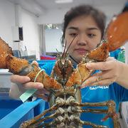 Hải sản ngoại độc, lạ, 'đi máy bay' về Việt Nam