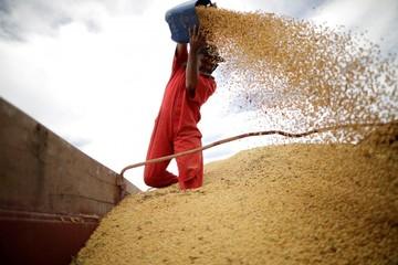 Trung Quốc tuyên bố dừng mua nông sản Mỹ