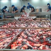 Bà Rịa - Vũng Tàu thành lập cụm công nghiệp chế biến hải sản hơn 50 ha