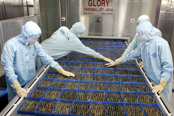VDSC: Lợi nhuận nuôi tôm FMC năm nay sẽ cao nhất lịch sử công ty