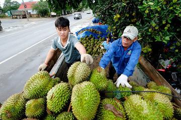 Việt Nam xuất siêu 1,7 tỷ USD sau 7 tháng