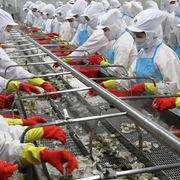 Lãi công ty mẹ Minh Phú quý II tăng 46% nhờ hoạt động tài chính khác