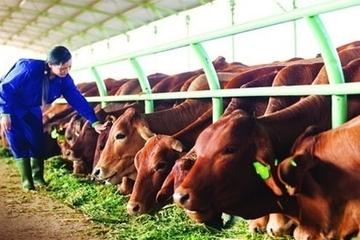 Trân Oanh mua vào 37,7 triệu cổ phiếu HNG từ ông Trần Bá Dương