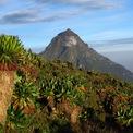 """<p class=""""Normal""""> <strong>Rwanda</strong></p> <p class=""""Normal""""> Năm 2018, Rwanda được tạp chí du lịch Luxury Travel đặt tên là điểm đến xa xỉ mới của châu Phi. Nơi đây có nhiều điểm nổi bật về thiên nhiên hoang dã với 3 công viên nổi tiếng là Akagera, Nyungwe, và công viên núi lửa quốc gia.</p>"""