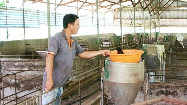 Dịch tả lợn châu Phi gây thiệt hại nặng ở Đồng Nai