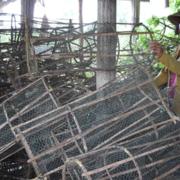 Nông dân miền Tây mất mùa tôm cá vì lũ không về