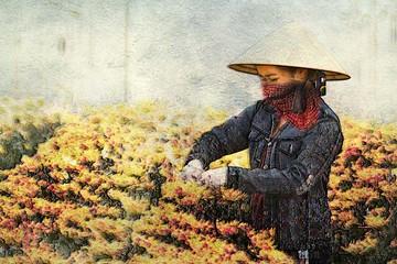 Tấm 'hộ chiếu' cho hoa Đà Lạt