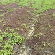 Quảng Nam, Đà Nẵng: Ruộng khô, đô thị 'khát'