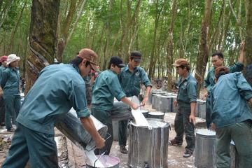 Cao su Đồng Phú chia cổ tức 10%, lập dự án nông nghiệp công nghệ cao gần 500ha