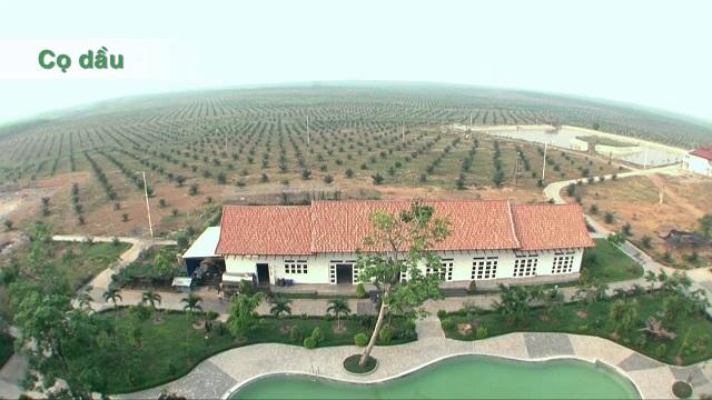HAGL Agrico bán Cao su Đông Dương và Đông Pênh với giá hơn 5.900 tỷ đồng