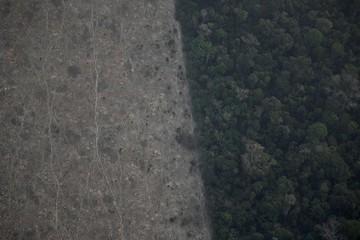 Thương chiến Mỹ - Trung có thể thổi bùng cháy rừng Amazon