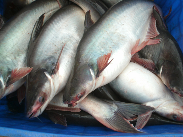 Giá cổ phiếu ngành cá tra điều chỉnh sâu