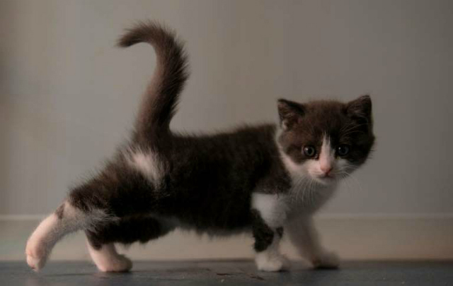 © STR Garlic's owner said he hoped the character of the kitten clone would be like that of the original cat