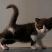 Trung Quốc lần đầu nhân bản vô tính mèo thành công