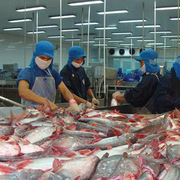 Doanh số xuất khẩu Vĩnh Hoàn tháng 8 giảm mạnh về 27 triệu USD