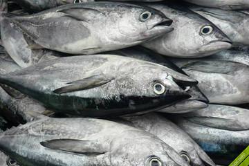 Xuất khẩu cá ngừ sang Trung Quốc sụt giảm sau 6 tháng tăng trưởng