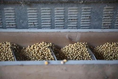 Trung Quốc cân nhắc mua lại nông sản Mỹ