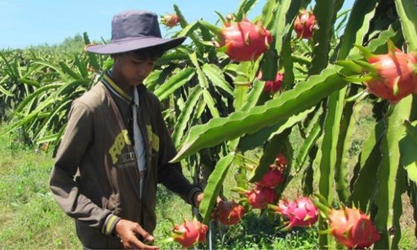 Bộ trưởng Nguyễn Xuân Cường: 3 thách thức khiến xuất khẩu nông sản sang Trung Quốc giảm