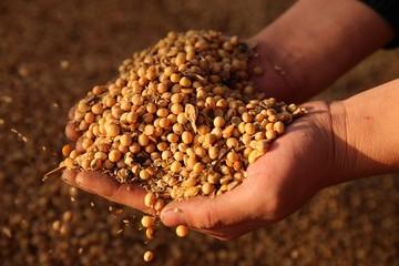 Trung Quốc nhập khẩu đậu nành Mỹ nhiều nhất kể từ tháng 6