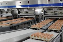 Hòa Phát dẫn đầu sản lượng trứng gà miền Bắc