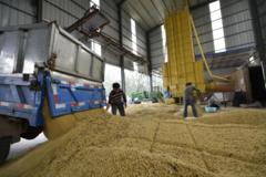 Bloomberg: Trung Quốc mở đường cho nhập khẩu đậu nành Mỹ