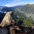 <p> Victor, chú đại bàng đuôi trắng 9 tuổi được gắn camera 360 độ, đang bay qua khu vực Chamonix, Pháp vào ngày 8/10. Chú chim này cùng với nhóm người huấn luyện đang chuẩn bị cho Cuộc đua Đại bàng Alpine nhằm nâng cao nhận thức về sự nóng lên toàn cầu. Ảnh: <em>Reuters</em>.</p>