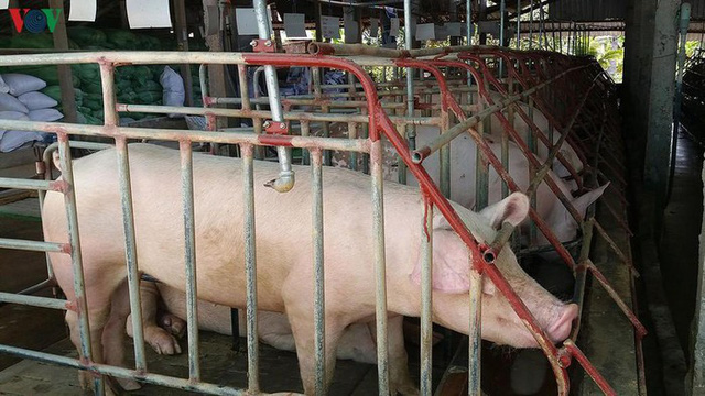 Giá thịt lợn cao kỷ lục và tiếp tục tăng có cần thiết nhập khẩu thịt lợn - Ảnh 2.