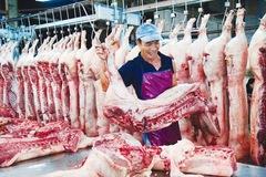Tiêu hủy hơn nửa triệu con lợn, Hà Nội thiếu gần 100.000 tấn thịt