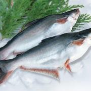 VASEP: Xuất khẩu cá tra khó thoát tăng trưởng âm