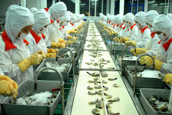 Sao Ta báo lãi quý III tăng 30% giữa bối cảnh ngành tôm khó khăn