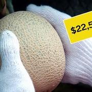 Vì sao dưa lưới có giá hơn 500 triệu đồng một quả tại Nhật Bản?