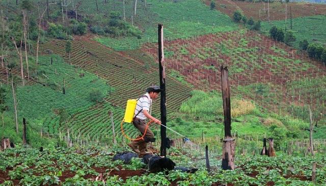 Tổng rà soát đất đai nông lâm trường
