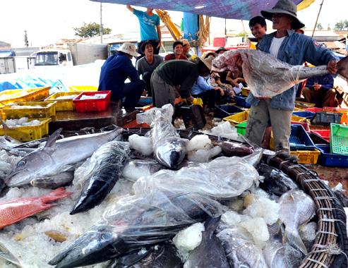 Bộ trưởng Nguyễn Xuân Cường: Giá trị xuất khẩu cá ngừ có thể tăng gấp 2-3 lần hiện tại