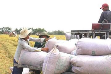 Xuất khẩu gạo 10 tháng giảm 9,1% do rớt giá