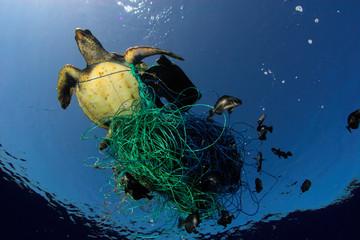 Hiểm họa từ 'ngư cụ ma' trong lòng đại dương