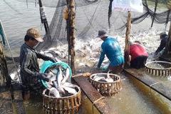 Cá tra Việt Nam phải cạnh tranh khốc liệt